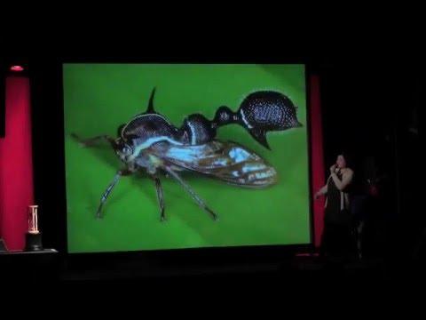 'Das bizarre Sexualleben der Windenglasflügelzikade' - Susanne Grube beim #48 Science Slam Berlin