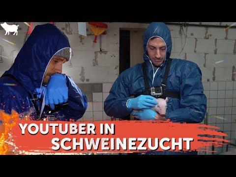 YouTuber in der Schweinezucht