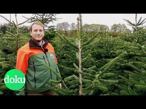 Woher kommt unser Weihnachtsbaum?   WDR Doku