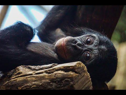 Haben Tiere Bewusstsein, Emotionen & ein Gerechtigkeitsempfinden?   Primatologe Dr. Frans De Waal