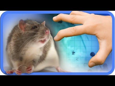 Warum gibt es Tierversuche?