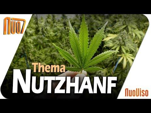 Nutzhanf - Alleskönner der Natur