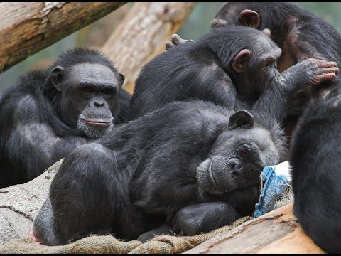 Do Animals have Consciousness, Emotions & a sense of Fairness? | Interview with Frans De Waal