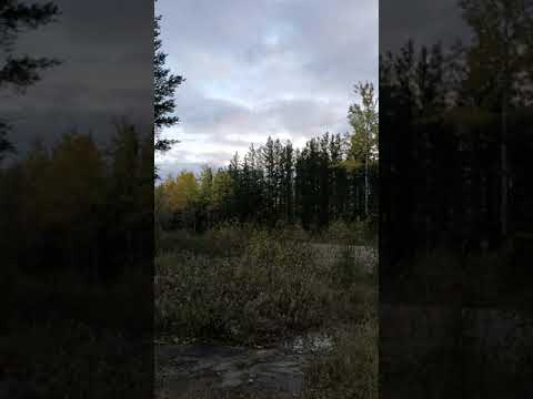 strange unknown noise caught on video