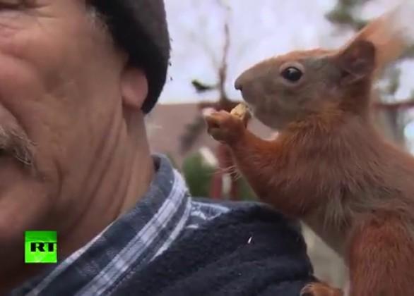 Er rettete dem Eichhörnchen das Leben – Nun folgt es ihm auf Schritt und Tritt