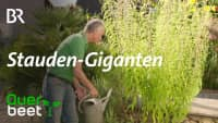 Stauden-Giganten: Ausrufezeichen im Garten!