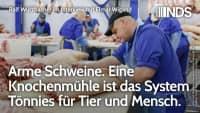 Arme Schweine. Eine Knochenmühle ist das System Tönnies für Tier + Mensch, Interview m. Elmar Wigand