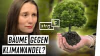 Bäume gegen Klimawandel: Was steckt hinter den Versprechen? | STRG_F