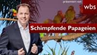 Strafe für Papageien-Gang? Zoo-Besucher aufs Übelste beschimpft | Anwalt Christian Solmecke
